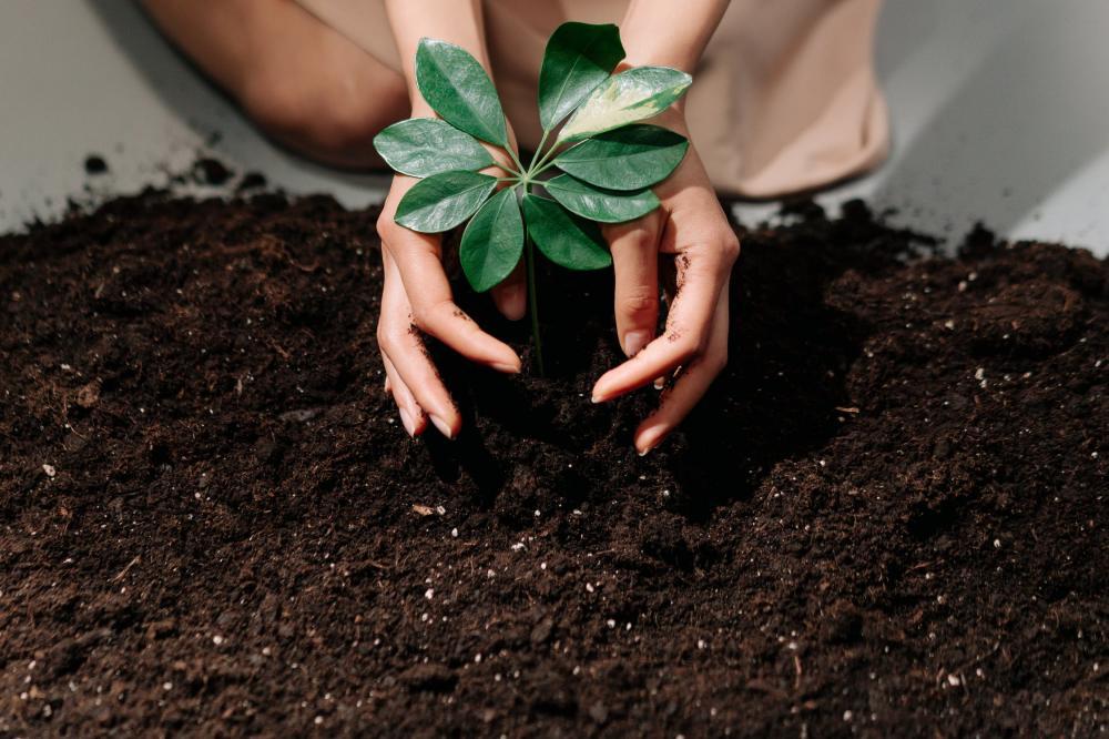 Un activateur de compost pour simplifier le travail de jardinerie
